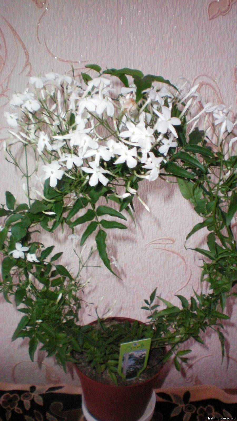 Белые цветы фото и названия. Выбираем растения с белыми